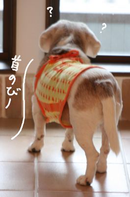 24_20081029181807.jpg