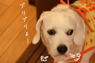25_20081029181814.jpg