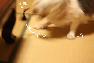 27_20081029181826.jpg