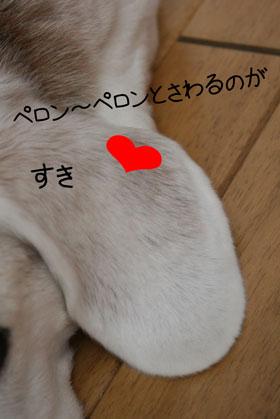 2_20081025132100.jpg