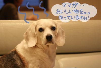 2_20081027111811.jpg