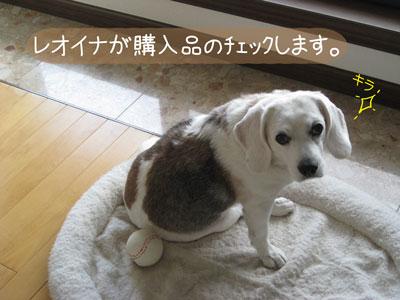 2_20081104185122.jpg
