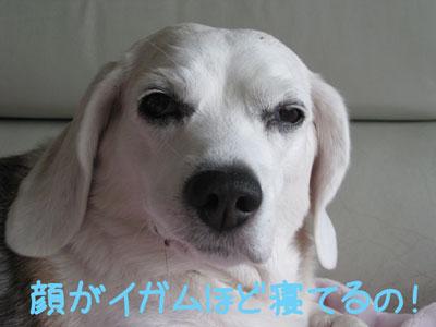 2_20081111132505.jpg