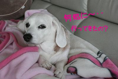2_20081126210136.jpg