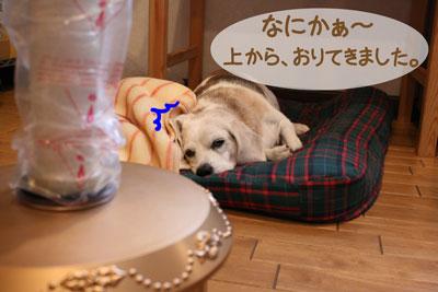 2_20081205154758.jpg