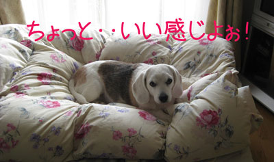 2_20081219155253.jpg