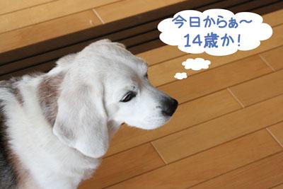 2_20090105144141.jpg
