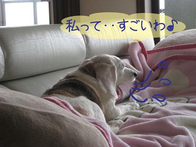 2_20090131195455.jpg