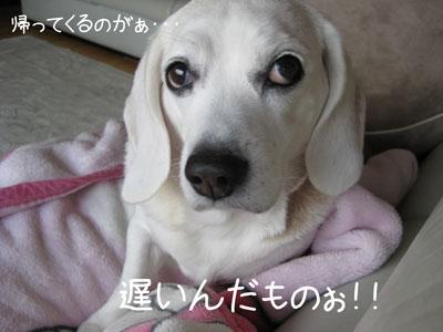 2_20090202204141.jpg