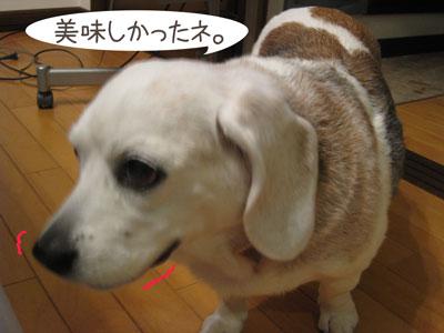 2_20090203215004.jpg