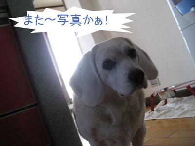 2_20090208184206.jpg