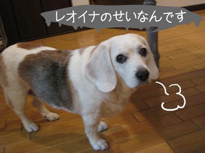 2_20090209185142.jpg
