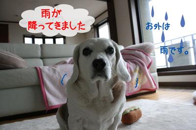 2_20090213155426.jpg