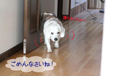 2_20090218205043.jpg