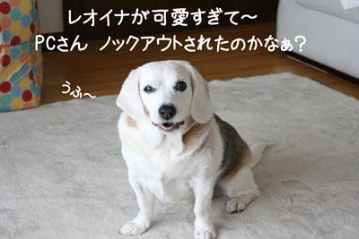 2_20090227220413.jpg