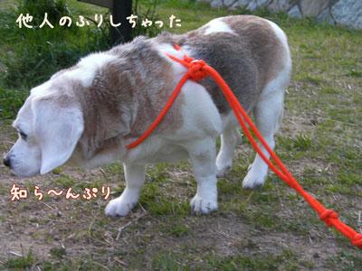 2_20090407204403.jpg