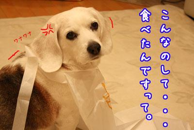 2_20090415212406.jpg