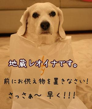 2_20090416111639.jpg