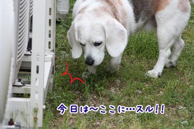 2_20090418215542.jpg