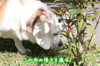 2_20090419220934.jpg