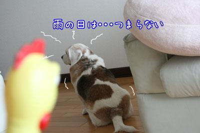 2_20090516182143.jpg