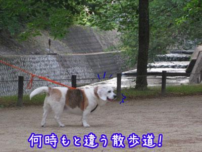 2_20090603203609.jpg