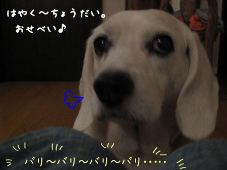 2_20090625112402.jpg