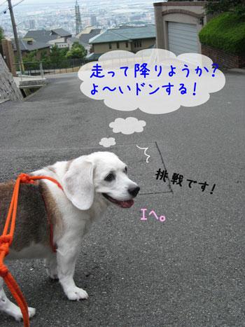2_20090810181614.jpg