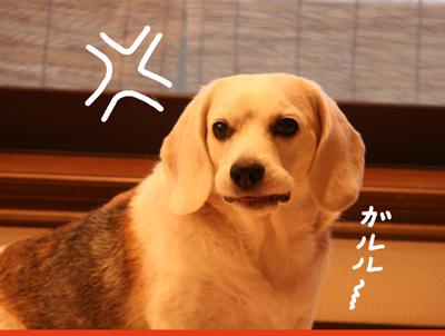 30_20081029181846.jpg