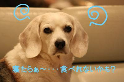 3_20081027111818.jpg