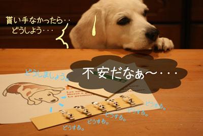3_20081211205718.jpg
