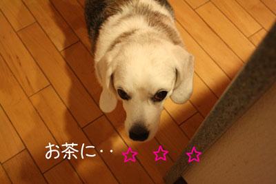 3_20081226201811.jpg