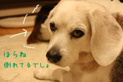 3_20090110193227.jpg