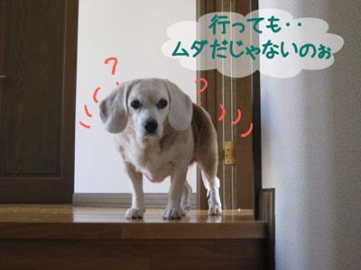 3_20090118123414.jpg