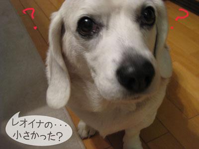 3_20090203215013.jpg