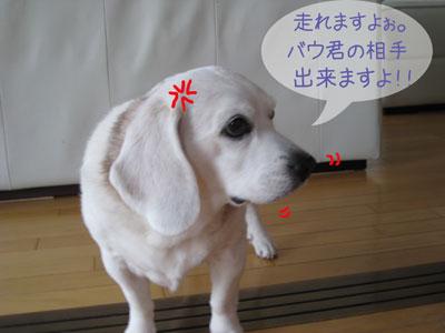 3_20090206190932.jpg