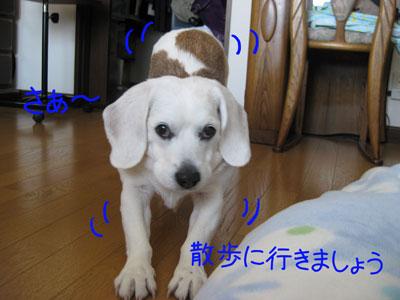 3_20090208184213.jpg