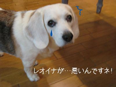 3_20090209185149.jpg
