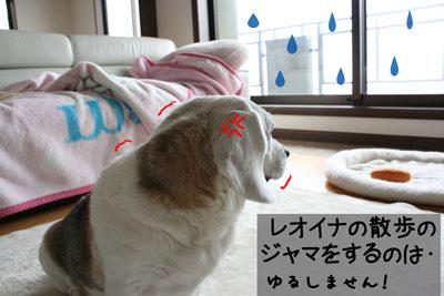 3_20090213155433.jpg