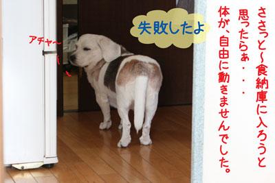3_20090216180940.jpg