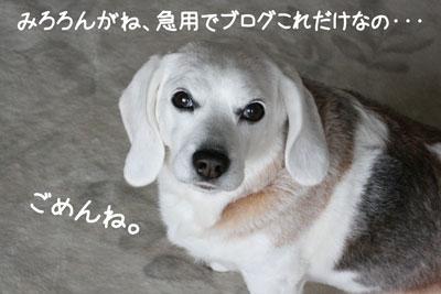 3_20090218205050.jpg
