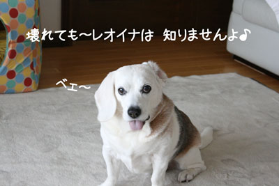 3_20090227220419.jpg