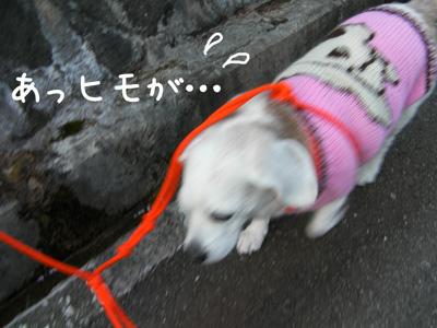 3_20090310185758.jpg