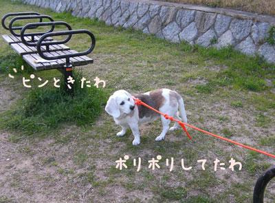 3_20090407204403.jpg