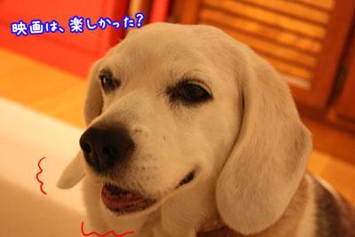 3_20090408204221.jpg