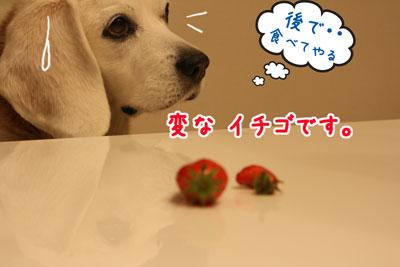3_20090412140048.jpg