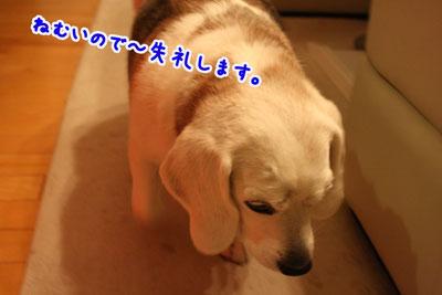 3_20090413213318.jpg