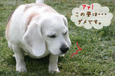3_20090418163235.jpg