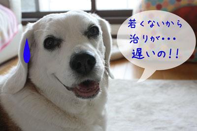 3_20090512135747.jpg
