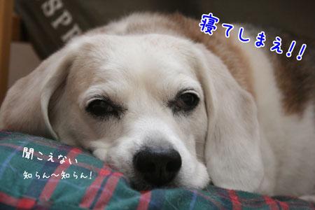 3_20090613120839.jpg